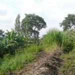 Vegetabel Garden Tanzania